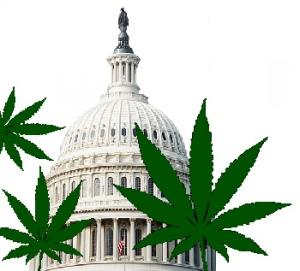 DC cannabis