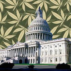 Washington DC medical marijuana