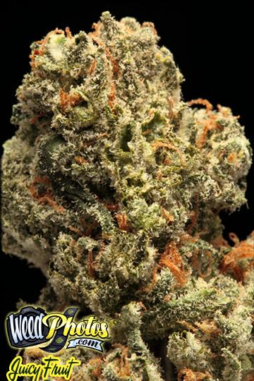 juicy fruit marijuana strain