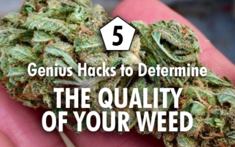 quality of your weed