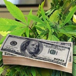 Cash cost of legal marijuana uruguay colorado washington
