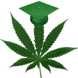 college marijuana cannabis university study