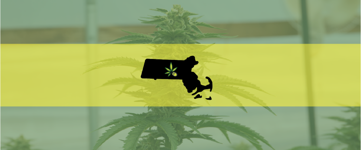 Picture of the Massachusetts flag over a cannabis plant—in the state a man was just arrested for a weed operation.