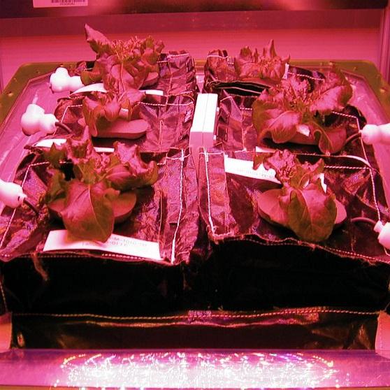 lettuce led grow lights nasa
