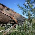 outdoor-cannabis-animal-protection
