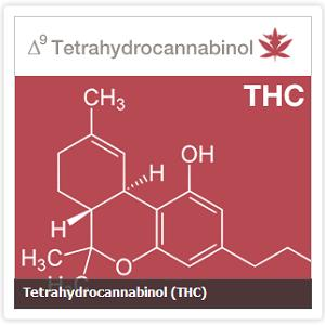 thc marijuana cannabis skin allergies